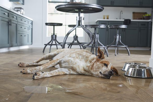 Water-Resistant Laminate from $1.48 sq ft