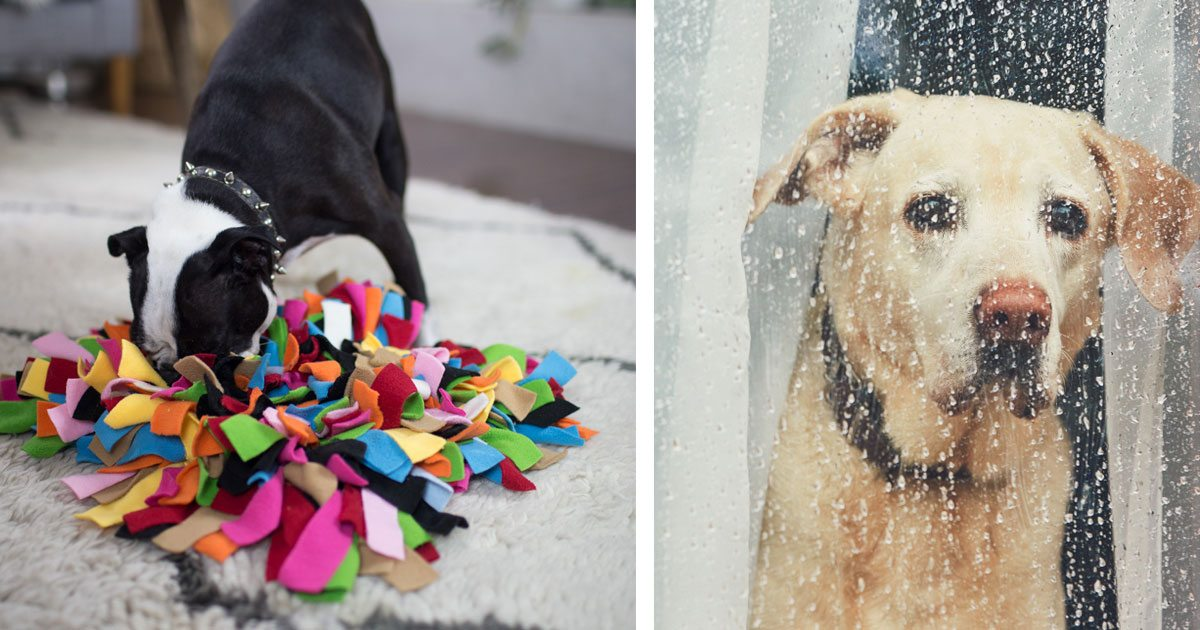 This Might Be the Best Way to Entertain a Bored Dog on a Rainy Day