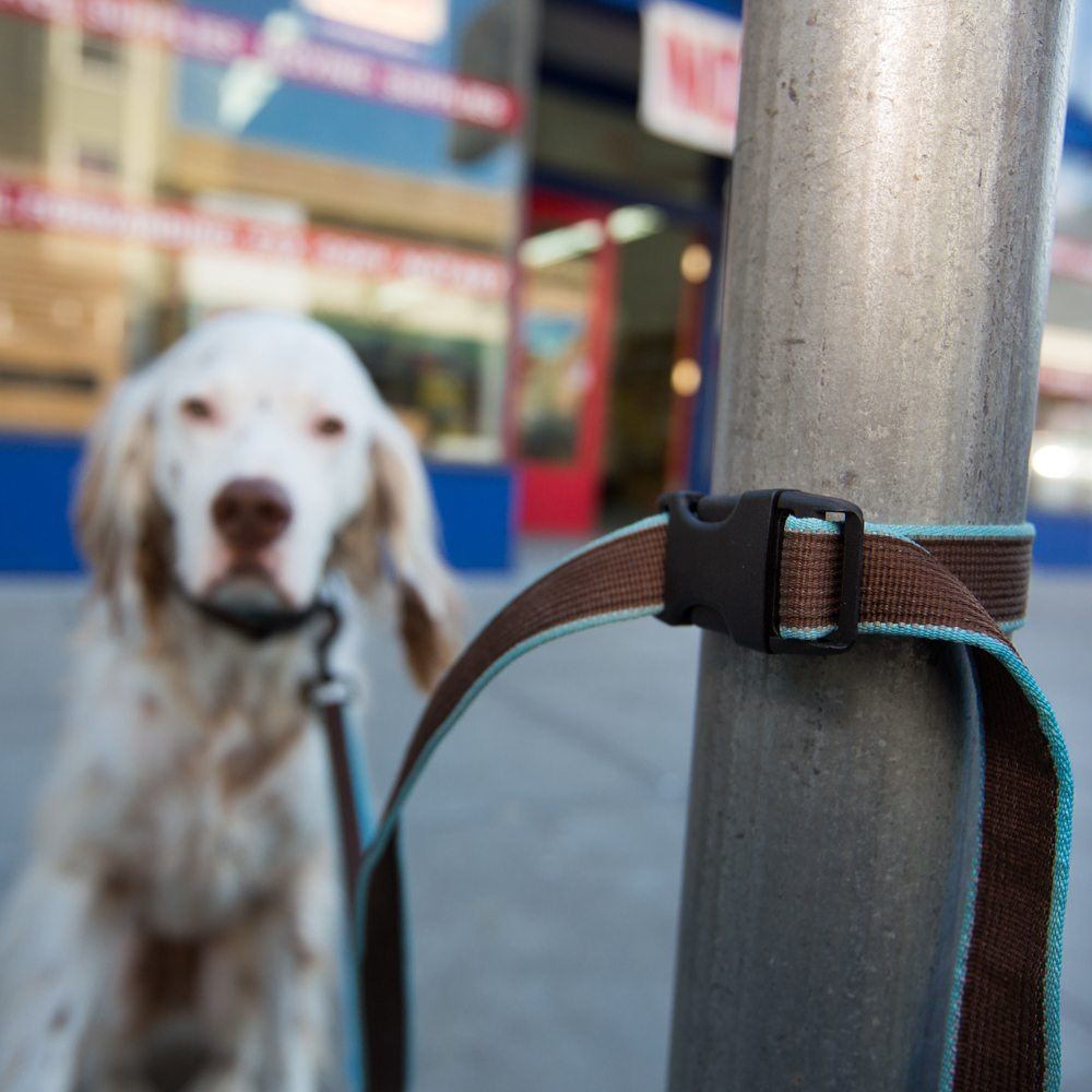 Out N' About Easy Tether Dog Leash
