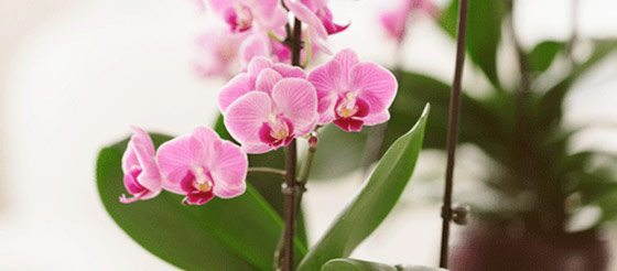 6 Ways to Keep Your Orchids Thriving