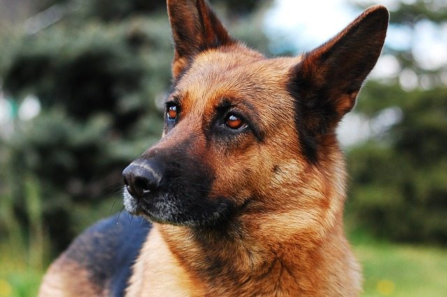 The 10 Most Loyal Dog Breeds