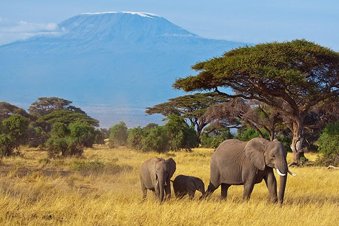 Explore Kilimanjaro Summit and Safari
