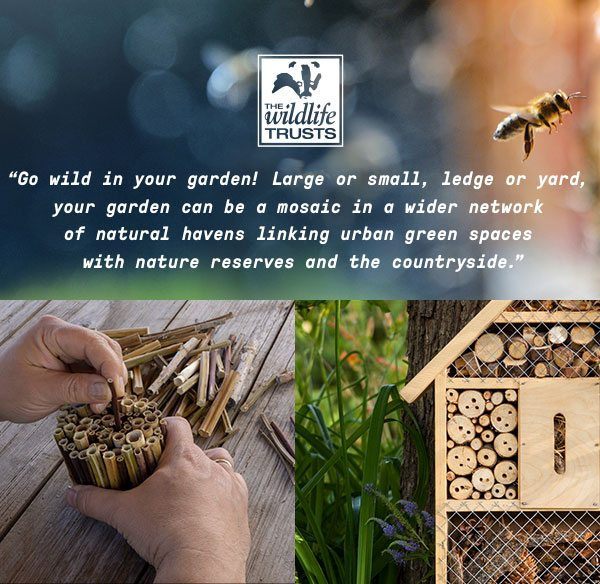 Go wild in your garden! Large or small, ledge or yard, your garden can be a mosaic in a wider network of natural havens linking urban green spaces with nature reserves and the countryside