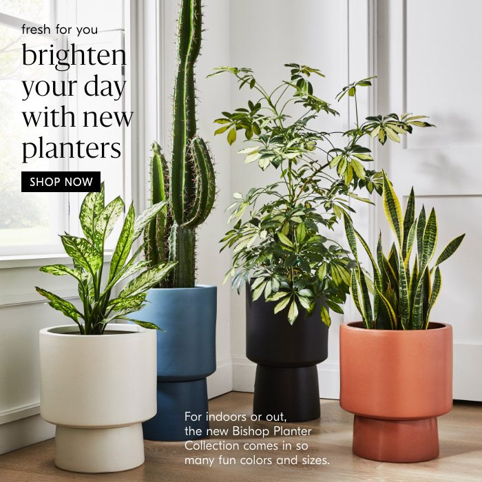 brighten your day with new planters