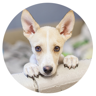 Puppies Petfinder Email Archive