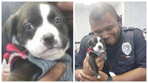 Florida Police Officer Goes On A Call To The Animal Rescue…And Leaves With a Puppy