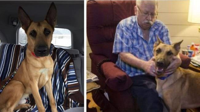"Innocent Service Dog Avoids The ""Death Penalty"" Thanks To DNA Evidence"