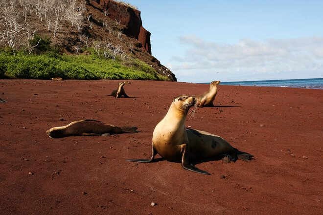 Explore Best of Ecuador & Galapagos