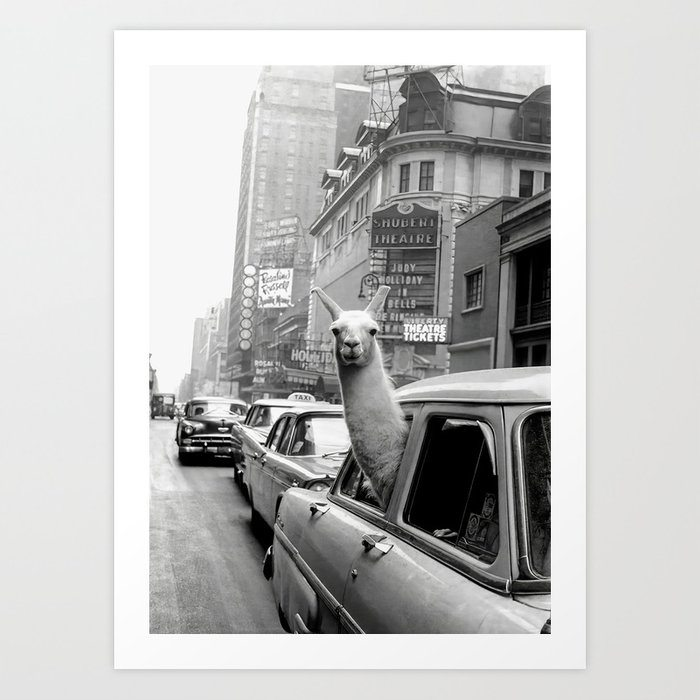 Llama Riding in Taxi, Black and White Vintage Print