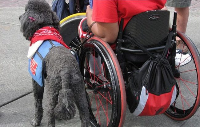 10 Things People With Service Dogs Want You To Know
