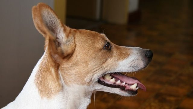 The Easiest Way To Help Your Dog Maintain His Dental Health