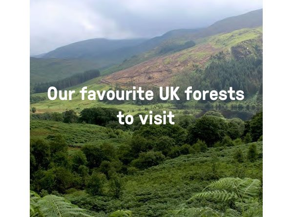 Our favourite UK forests to visit