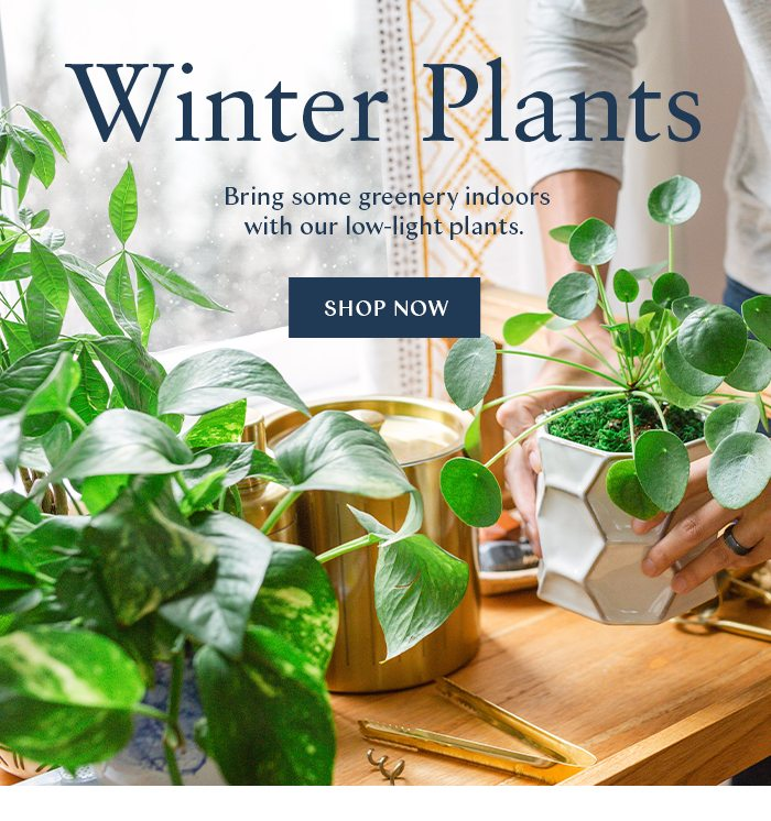 Winter Plants. Bring some greenery indoors with our low-light plants.