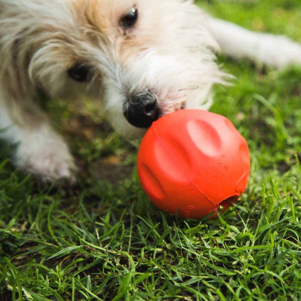 The BetterBall™ – A Stronger, Safer, Easier to Clean Stuffable Ball Dogs Go Crazy Over! (2 PACK)