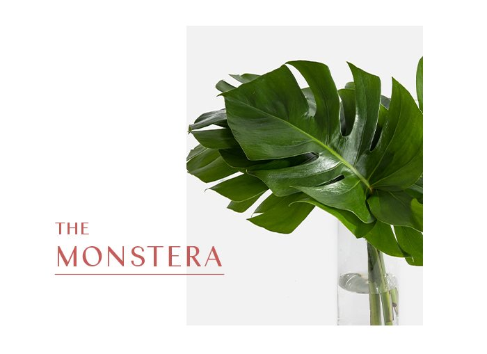 The Monstera