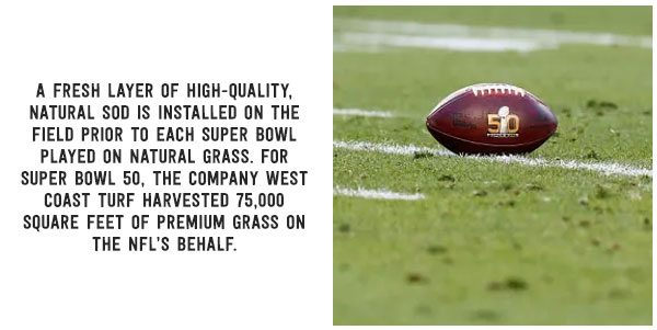 A fresh layer of high-quality natural sod is installed on the field prior to each Super Bowl played on natural grass. For Super Bowl 50, the company West Coast Turf harvested 75,000 square feet of premium grass on the NFL's behalf.