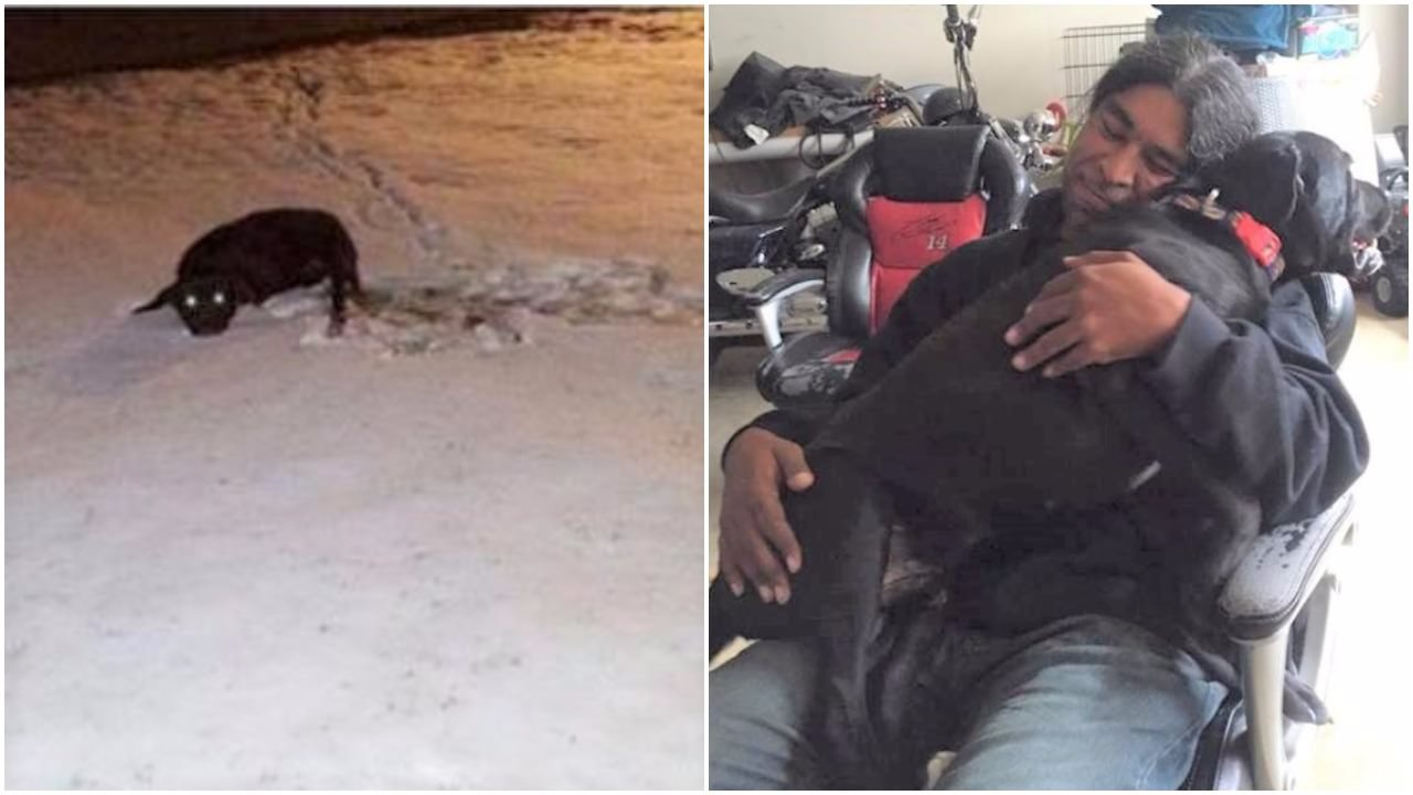 Dog Left For Dead Leaps Into The Arms Of The Man Who Saved Him