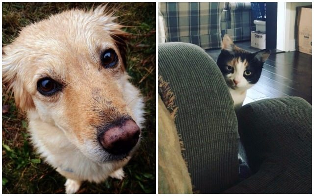 14 Major Differences Between Life With Dogs & Life With Cats