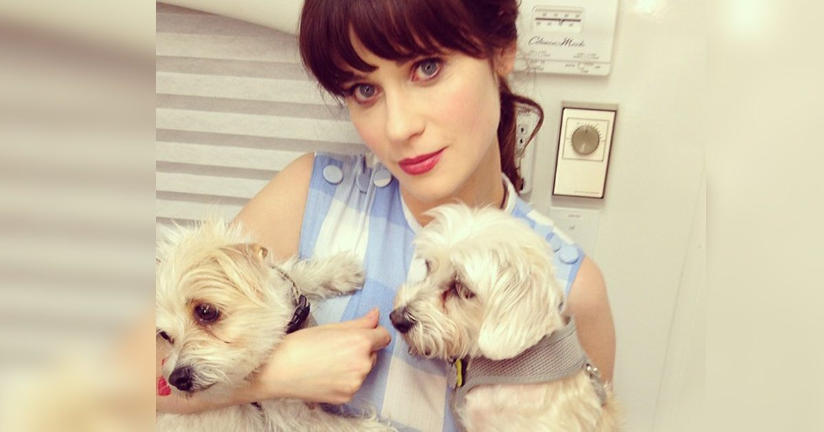 12 Celebs Who Rescued Their Best Fur Friends