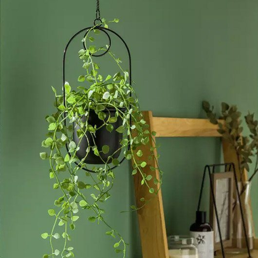 Spruce up your space. Indoor plants for a happy home.