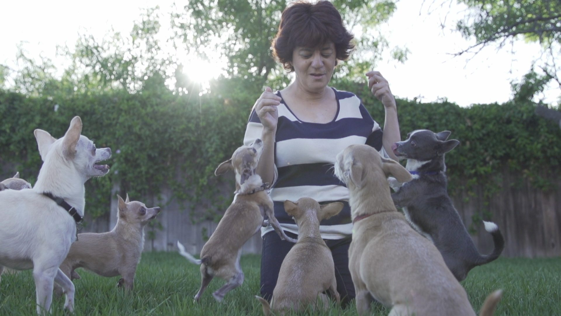 This Former Hollywood Stunt Double Has Saved Over 2,000 Dogs